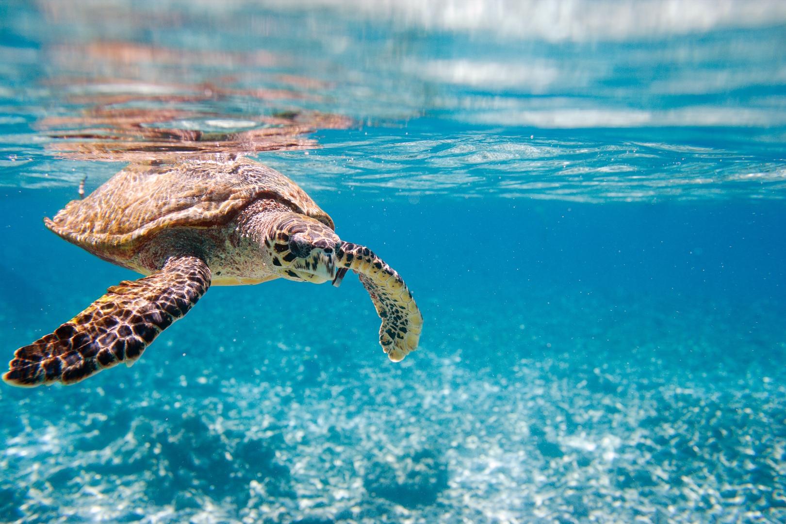 concours: Voyage aux Seychelles